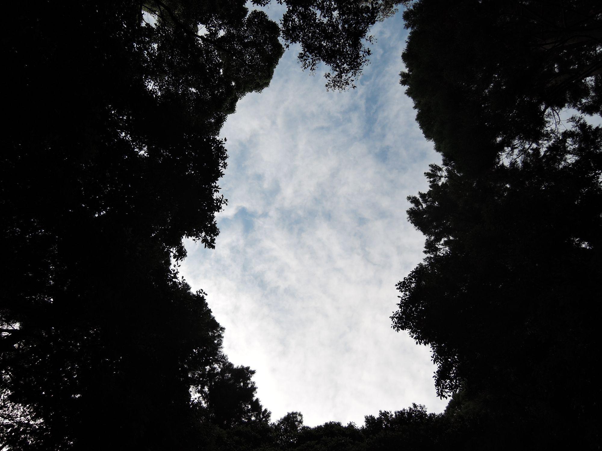 ファイル 1510-2.jpg